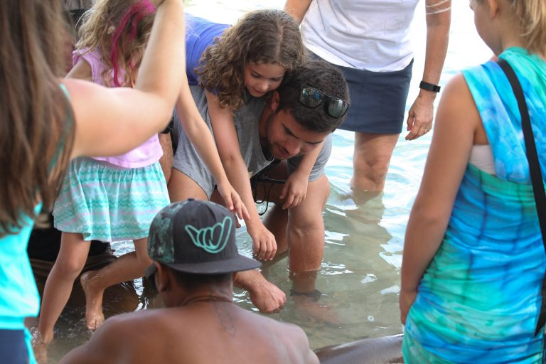 Petting the nurse shark