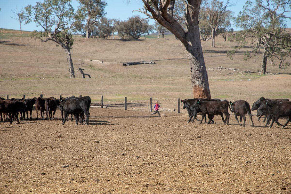 , Yarrandaba Cattle Station