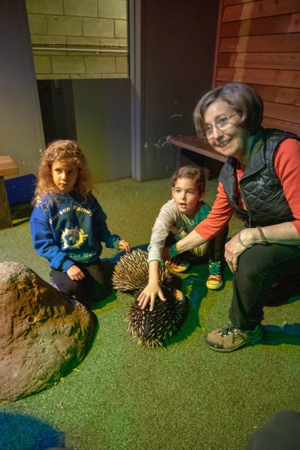 Spending time with Echidnas