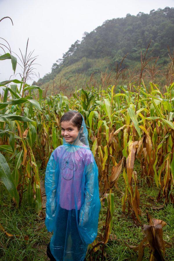 Walking through the corn fields