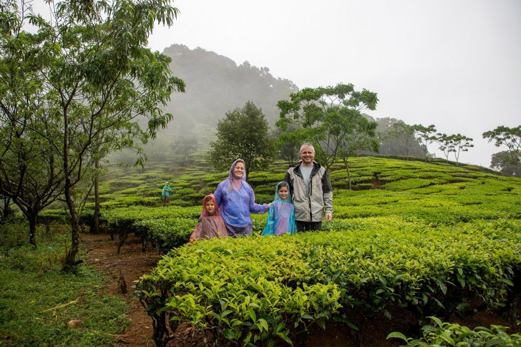 Strolling through the Tea Plantation